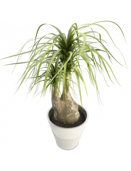 plante-interieur-beaucarnea-en-pot-3d