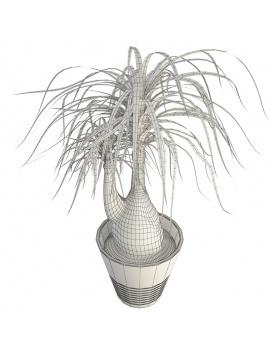 plante-interieur-beaucarnea-en-pot-3d-filaire