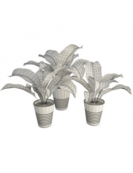 interior-plant-collection-3d-models-wireframe