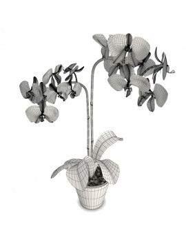 orchids-phalaenopsis-collection-3d-blue-wireframe