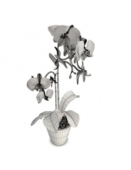orchids-phalaenopsis-collection-3d-white-pink-wireframe