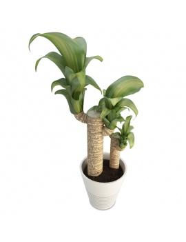 plante-interieur-dracanea-en-pot-3d-dracanea