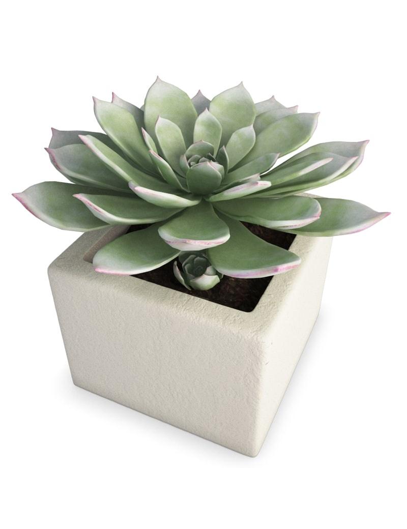plante grasse d 39 int rieur en 3d t l charger en max et obj. Black Bedroom Furniture Sets. Home Design Ideas