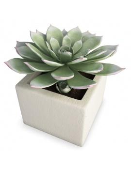 interior-succulent-plant-3d-aeonium