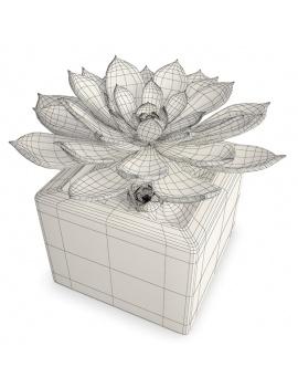 interior-succulent-plant-3d-aeonium-wireframe