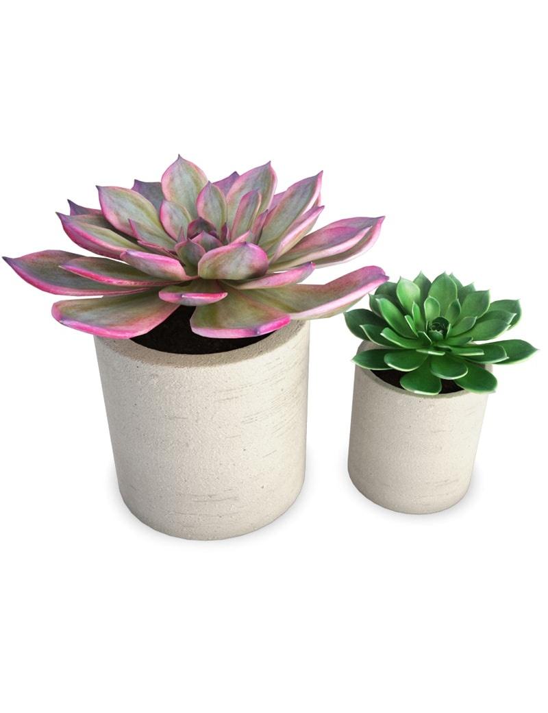 duo de plantes grasses d 39 int rieur en 3d t l charger en. Black Bedroom Furniture Sets. Home Design Ideas