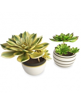 two-interior-succulent-plants-aeonium-3d