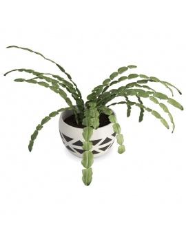 succulent-plant-3d-schlumbergera