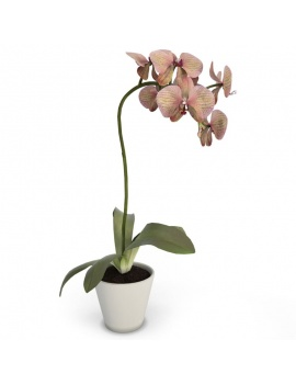 cuisine-moderne-complete-3d-orchidee