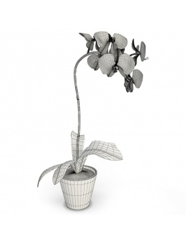 cuisine-moderne-complete-3d-orchidee-filaire