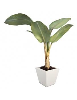 collection-de-plantes-et-fleurs-3d-bananier