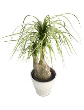 collection-de-plantes-et-fleurs-3d-beaucarnea