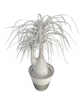 collection-de-plantes-et-fleurs-3d-beaucarnea-wireframe