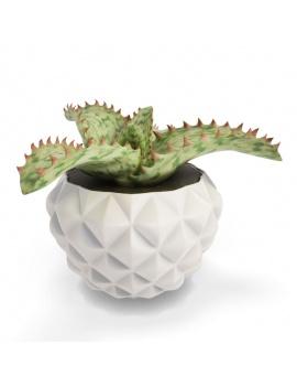 collection-de-plantes-et-fleurs-3d-cactus-aloe-somaliensis
