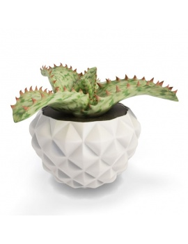 collection-plants-flowers-3d-cactus-aloe-somaliensis