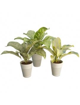 collection-de-plantes-et-fleurs-3d-diffenbachia
