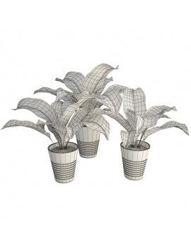 collection-de-plantes-et-fleurs-3d-diffenbachia-filaire