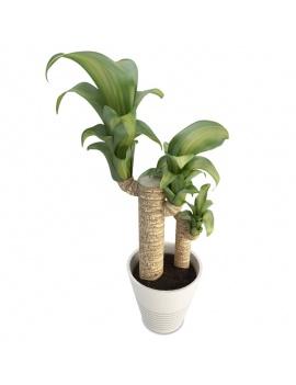 collection-de-plantes-et-fleurs-3d-Dracanea