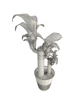 collection-plants-flowers-3d-dracanea-wireframe