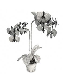 collection-de-plantes-et-fleurs-3d-orchidee-bleue-filaire