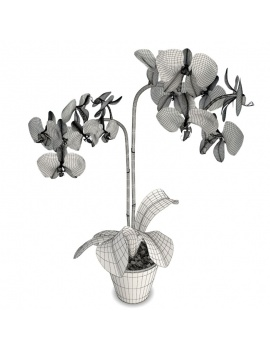 collection-plants-flowers-3d-blue-orchid-wireframe