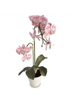collection-plants-flowers-3d-pink-orchid