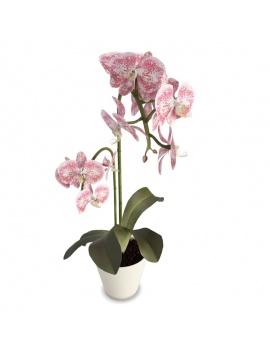 collection-de-plantes-et-fleurs-3d-orchidee-rose