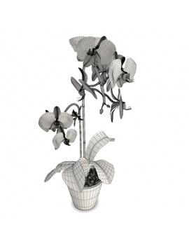 collection-de-plantes-et-fleurs-3d-orchidee-rose-filaire