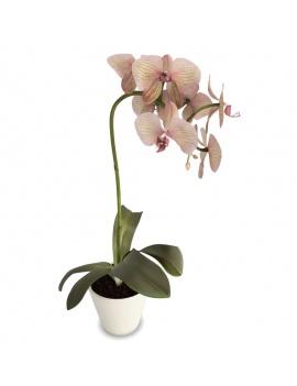 collection-de-plantes-et-fleurs-3d-orchidee-rose-jaune