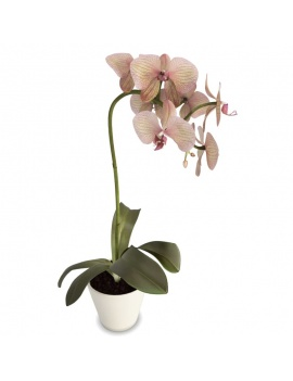 collection-plants-flowers-3d-pink-yellow-orchid