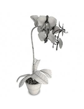 collection-de-plantes-et-fleurs-3d-orchidee-jaune-rose-filaire
