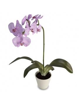 collection-de-plantes-et-fleurs-3d-orchidee-violette