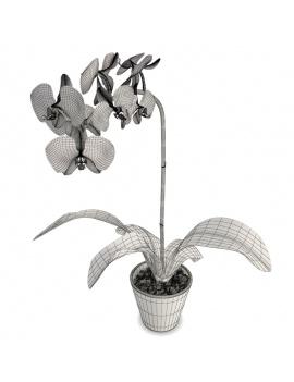 collection-de-plantes-et-fleurs-3d-orchidee-violette-filaire