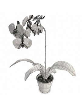 collection-plants-flowers-3d-purple-orchid-wireframe