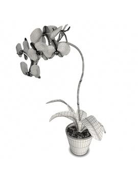 collection-de-plantes-et-fleurs-3d-orchidee-rouge-filaire