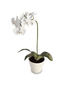 collection-de-plantes-et-fleurs-3d-orchidee-blanche