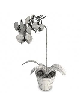 collection-de-plantes-et-fleurs-3d-orchidee-blanche-filaire