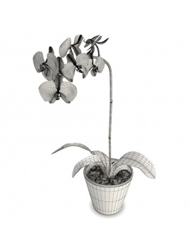 collection-plants-flowers-3d-white-orchid-wireframe