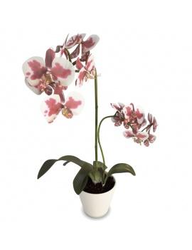 collection-de-plantes-et-fleurs-3d-orchidee-blanche-rose