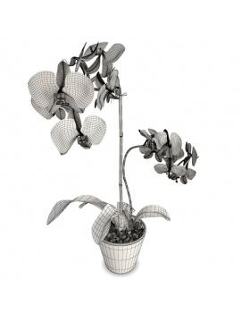 collection-de-plantes-et-fleurs-3d-orchidee-blanche-rose-filaire