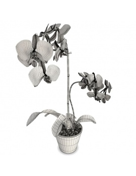 collection-plants-flowers-3d-pink-white-orchid-wireframe