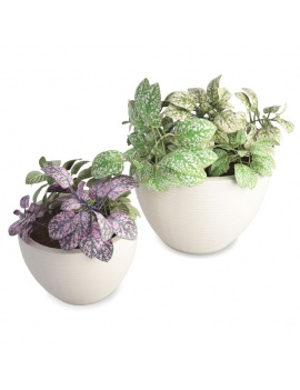 collection-de-plantes-et-fleurs-3d-pot-plantes