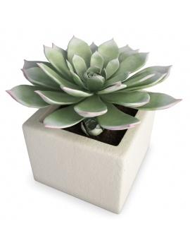 collection-de-plantes-et-fleurs-3d-plantes-grasses-1