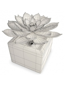 collection-plants-flowers-3d-succulent-plant1-wireframe