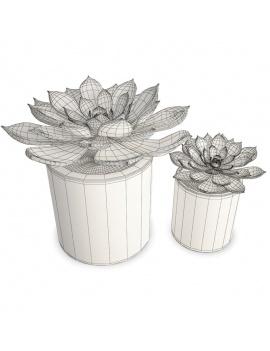 collection-de-plantes-et-fleurs-3d-plantes-grasses-2-filaire
