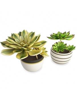 collection-de-plantes-et-fleurs-3d-plantes-grasses-3