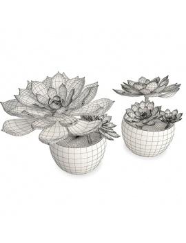 collection-de-plantes-et-fleurs-3d-plantes-grasses-3-filaire