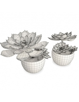 collection-plants-flowers-3d-succulent-plant3-wireframe