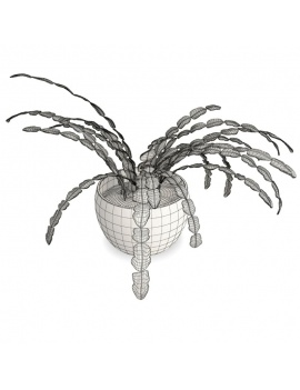 collection-plants-flowers-3d-succulent-plant4-wireframe