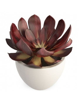 collection-plants-flowers-3d-succulent-plant5